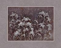 Пижма под снегом