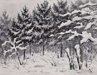 Сосны. Зимний лес. Графика